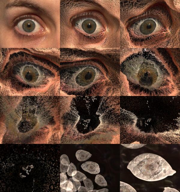 Marina Nunez RocioSantaCruz Gallery Video Art Contemporary Digital